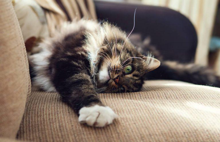 貓抓皮材質